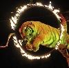 Цирки в Каслах